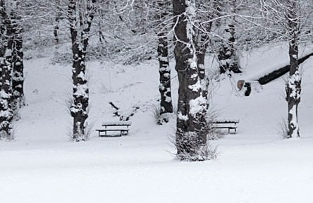Snow Covered Benches